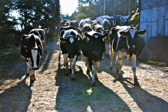 life-on-an-irish-farm